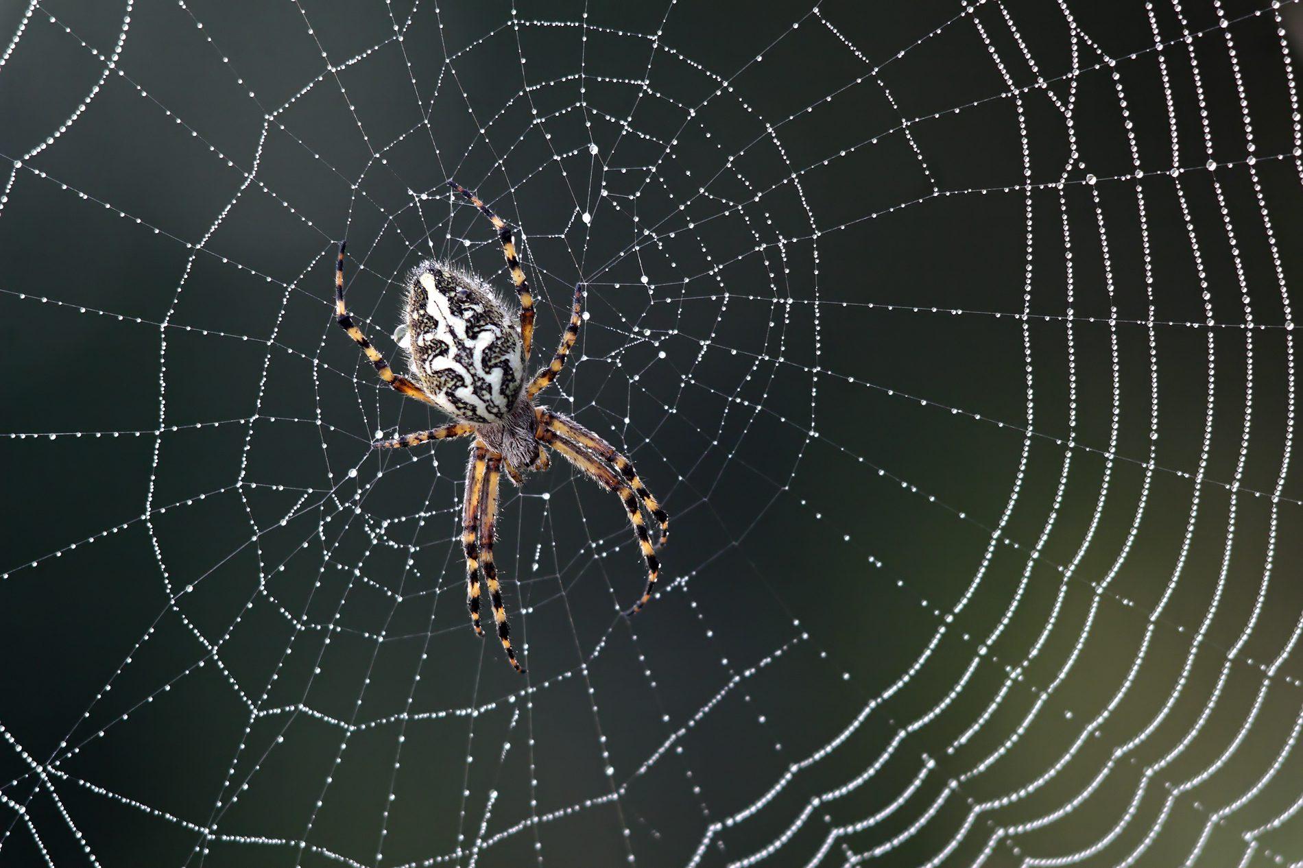 วิธีปฐมพยาบาล เมื่อโดน แมงมุมกัด ภัยร้ายใกล้ตัวที่คุณควรระวัง!!