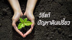 4 วิธีแก้ดินเปรี้ยวลดความเป็นกรด เติมธาตุอาหาร ให้สามารถปลูกพืชได้ผลดี