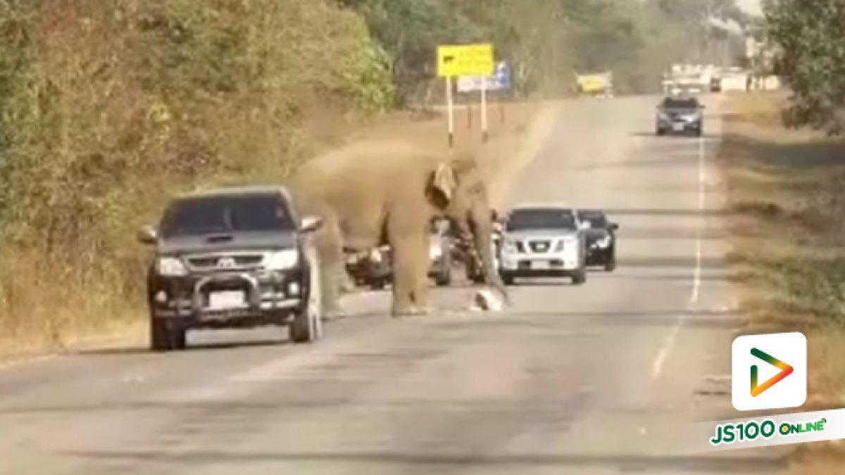 ช้างป่าที่หากินบนเส้นทาง 3076 ช่วงผ่านป่าเขาอ่างฤๅไน