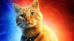 อะไรเลื้อยออกจากปากแมวของกัปตันมาร์เวล!! หรือ กูส จะเป็นเอเลี่ยนในหนัง Captain Marvel?