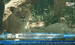 สัตว์ในสวนสัตว์จอร์เจียยังคงสูญหาย