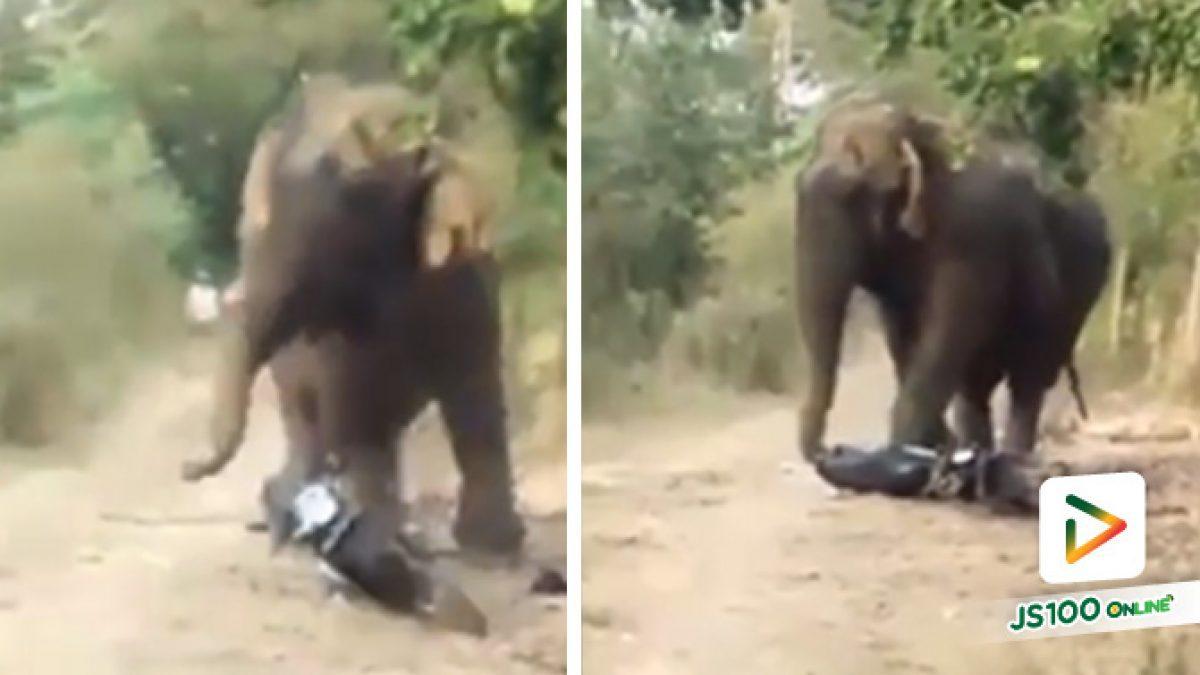 ช้างป่าอาละวาดหนัก กระทืบรถจยย. เสียหายทั้งคัน