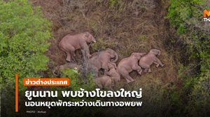 ยูนนานเผย 'ช้างป่า' โขลงใหญ่ หยุดนอนพัก ระหว่างอพยพใกล้คุนหมิง