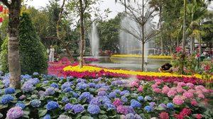 มหกรรมไม้ดอกไม้ประดับ เชียงใหม่ 2562 สวยอลังเหมือนอยู่เมืองหนาว
