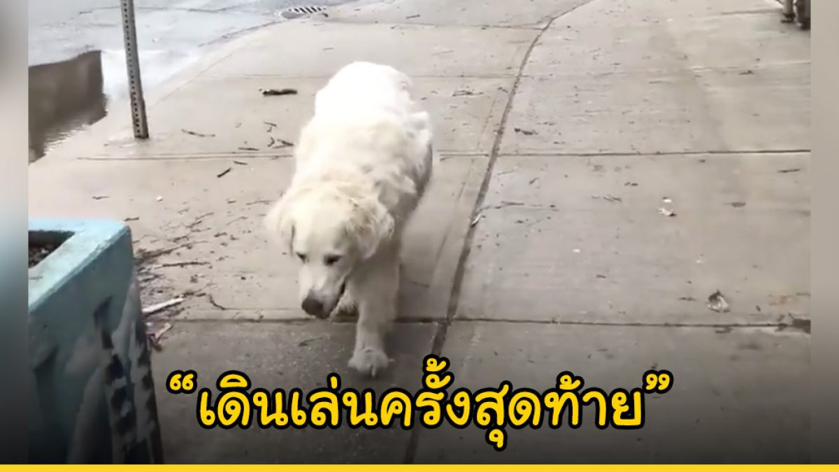 เจ้านายพาน้องหมาเดินไปหาหมอ โดยที่เขาไม่รู้เลยว่านี่คือการเดินเล่นครั้งสุดท้ายก่อนต้องจากโลกนี้ไปตลอดกาล