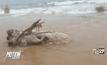 พบซากวาฬเกยตื้น จ.ภูเก็ต
