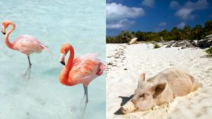 เที่ยวเกาะ 5 แห่ง ที่มีสัตว์อาศัยมากกว่าคนซะอีก น่ารักจนอยากติดเกาะ