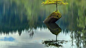 รวมรูปต้นไม้ ที่เติบโตได้แม้สภาพแวดล้อมไม่เอื้ออำนวย