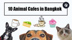 10 Animal Cafes in Bangkok