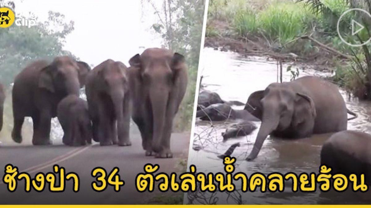 ทนร้อนไม่ไหว โขลงช้างป่าทองผาภูมิ กว่า 34 ตัว ออกจากลงเล่นน้ำคลายร้อน