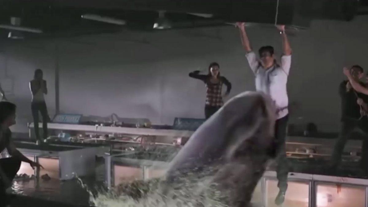 หนังฉลามพันธุ์โหดที่คุณอาจไม่เคยดูมาก่อน!
