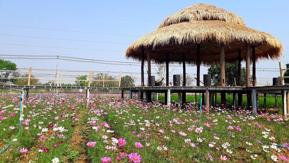 เดินตากลม ชมดอกไม้ และบัวบาน ณ สะพานฮักเด้อหินดาด โคราช
