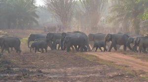 แห่ดูโขลงช้างป่า กว่า 70 ตัว แหล่งท่องเที่ยวใหม่ จ.จันทบุรี