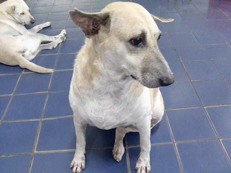swu cute dog (3)