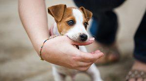 รู้ไว้ดีกว่า! วิธีปฐมพยาบาลเบื้องต้น เมื่อถูกสุนัขกัด ก่อนไปหาหมอ