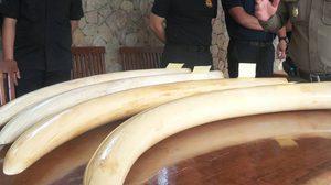 อุทยานกุยบุรี ระบุ ไม่พบช้างป่าถูกยิงล้ม ปี 57 ปม 'เปรมชัย'