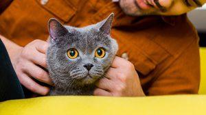 5 เหตุผล ที่หนุ่มโสดมักตกเป็น ทาสแมว แบบไม่รู้ตัว