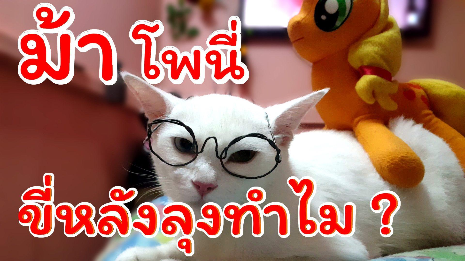 ม้าโพนี่  มาขี่หลังลุงทำไม ลุงแก่แล้วน่ะ | แมวพันธุ์ไทยขาวมณี | namsomvlog