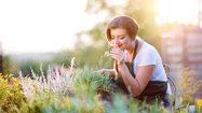 5 ต้นไม้มงคล ควรมีไว้ในบ้าน ไม้ดอกช่วยเสริมมงคลให้ชีวิต