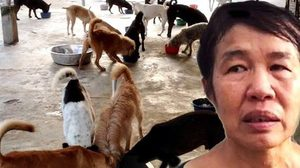 สั่งย้าย!หมาแมวร้อยชีวิตพ้นบ้านเช่า ป้าใจบุญร่ำไห้ไม่รู้จะไปอยู่ไหน?