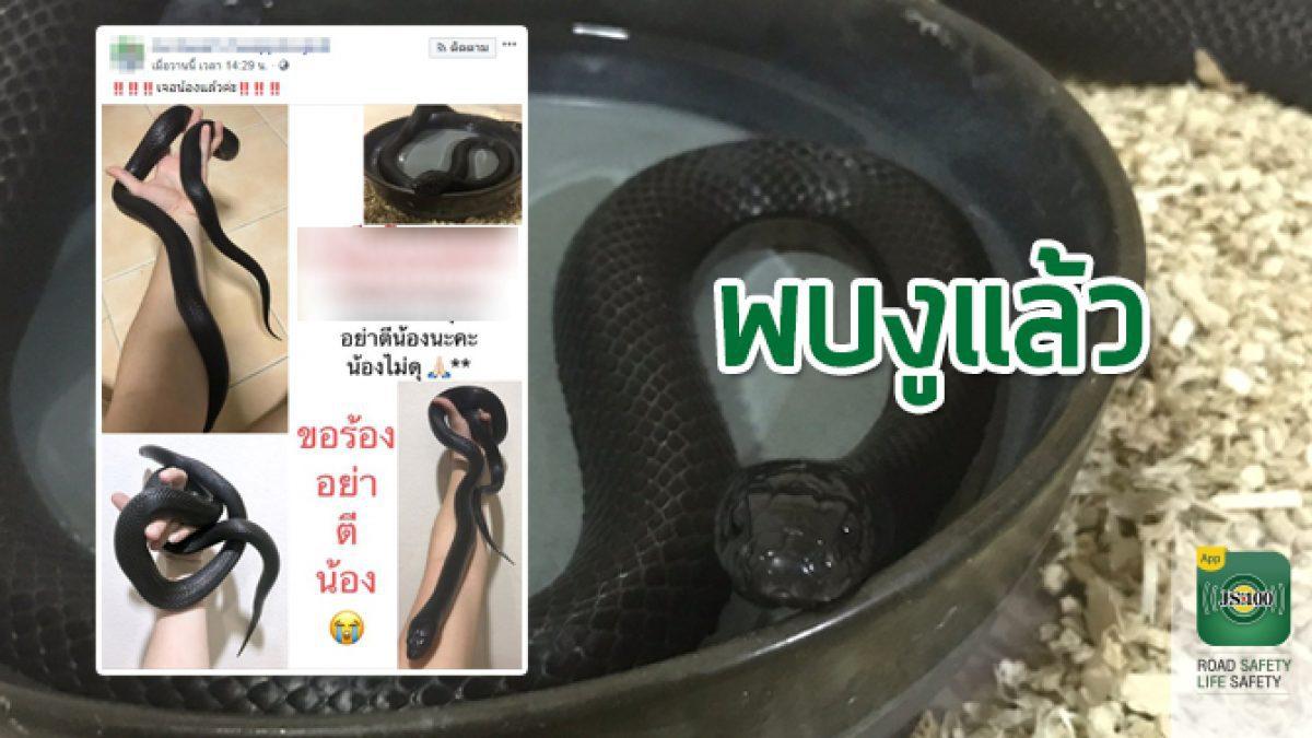 """พบแล้ว!! เจ้า """"MURK"""" งูพันธุ์แบล็ค คิงสเน็ค นอนหลบหลังสังกะสีของหอพัก เจ้าของดีใจน้ำตาไหล(20/07/62)"""