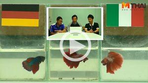ซี้ซั้วฟันธง! ปลากัดทายผล ยูโร 2016 เยอรมัน ปะทะ อิตาลี (2 ก.ค.)