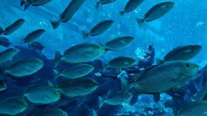Underwater World สิงคโปร์ ลดค่าตั๋วฮวบก่อนปิดตัว 26 มิ.ย. นี้