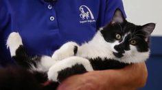 """น่ารักมาก! """"ซัพพอร์ต ด็อกส์"""" ใช้แมวทำหน้าที่ผู้ช่วยครู 'ฝึกสุนัข'"""