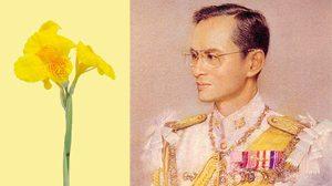 5 ธันวาคม วันพ่อแห่งชาติของประเทศไทย ความเป็นมา วันพ่อแห่งชาติ