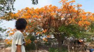 ทาร์ซานหนุ่มโผล่ลพบุรี หนีอาศัยอยู่บนต้นไม้ หลังถูกไล่ที่