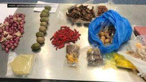 ออสเตรเลียเนรเทศหญิงเวียดนามซุกเนื้อหมู 10 กิโลเข้าประเทศ