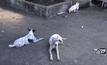 วัดจ.ลำปางรับภาระเลี้ยงสุนัขกว่า 400 ตัว