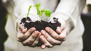 5 อย่างง่ายๆ ที่ต้องใส่ใจสำหรับ ปลูกต้นไม้ ให้งอกงาม