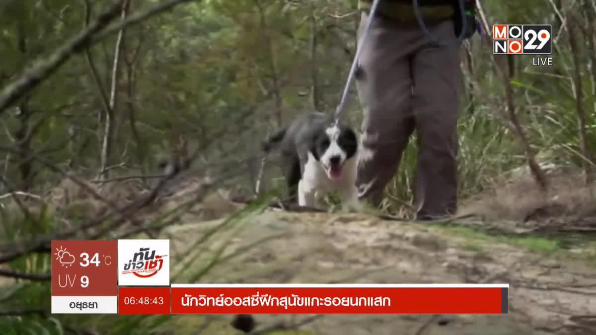นักวิทย์ออสซี่ฝึกสุนัขแกะรอยนกแสก