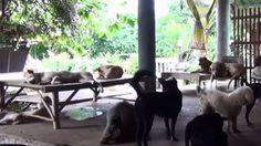 เผยนานาทัศนะ ปมขึ้นทะเบียนหมา-แมว