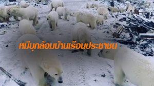 ฝูงหมีขั้วโลก บุกปิดล้อมหมู่บ้านชาวเกาะจนต้องประกาศภาวะฉุกเฉิน