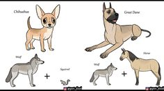 หมาในปัจจุบันมาจากการรวมสายพันธุ์อะไรบ้าง ไอเดียสุดฮาที่มองแล้วอดขำไม่ได้