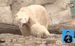 สวนสัตว์เยอรมนีเปิดตัวลูกหมีขาววัย 4 เดือน