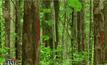 นายกฯ สั่งคืนสวนป่าแม่หอพระให้เป็นป่าสงวน