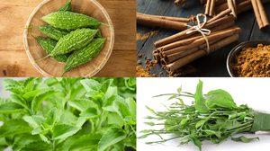 8 สุดยอดสมุนไพร รักษาเบาหวาน ลดน้ำตาลในเลือด ด้วยวิธีธรรมชาติ!!