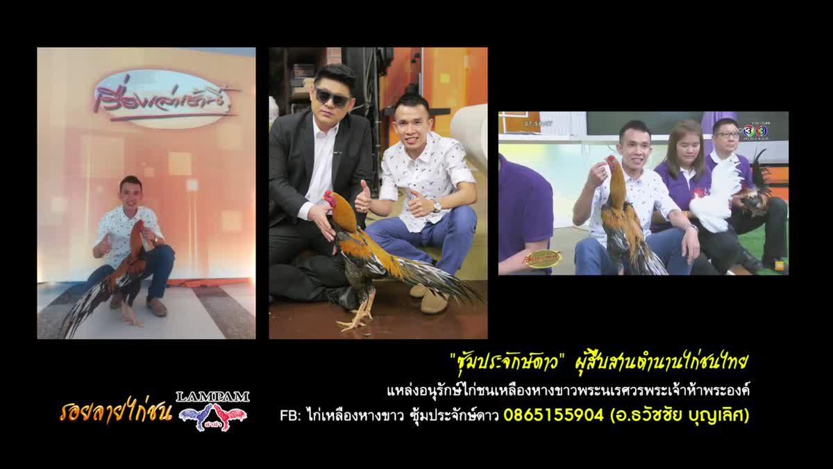 ซุ้มประจักษ์ดาว สืบสานตำนานไก่ชนไทย