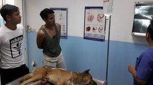 แห่ชื่นชม! นฤบดินทร์ใจบุญพาสุนัขเจ็บข้างถนนเข้ารักษาตัวโรงพยาบาล