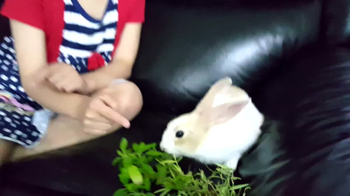 น้องเกรซเล่นกับกระต่ายน้อยแองเจิล