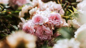 ทายนิสัย จากดอกไม้ที่คุณชอบ – จากดอกไม้ 12 ชนิดนี้