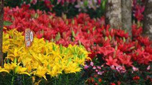มหกรรมไม้ดอกอาเซียนเชียงราย 2015