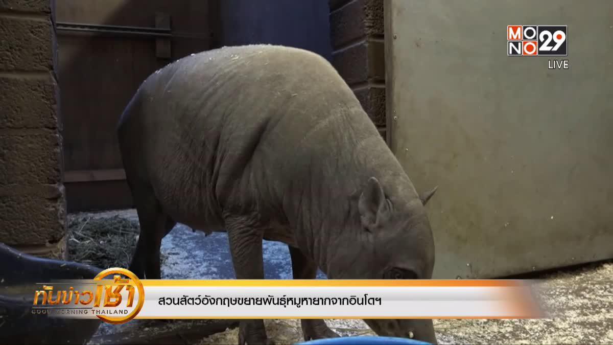 สวนสัตว์อังกฤษขยายพันธุ์หมูหายากจากอินโดฯ