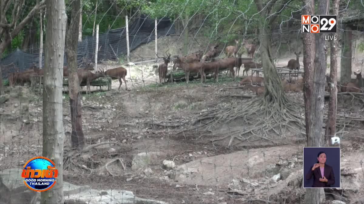 ตร.เร่งขยายผลคดี ผอ.องค์การสวนสัตว์ฯ ตรวจสอบปมสัตว์หาย