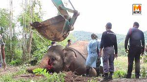 สัตวแพทย์ผ่าพิสูจน์ซากช้างป่า หลังพบถูกไฟฟ้าช็อตตาย