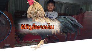 ฮือฮา! พบไก่โต้งแสนรู้ ในวัดดังที่ชลบุรี ก่อนถูกยกเป็นขวัญใจของชาวบ้าน