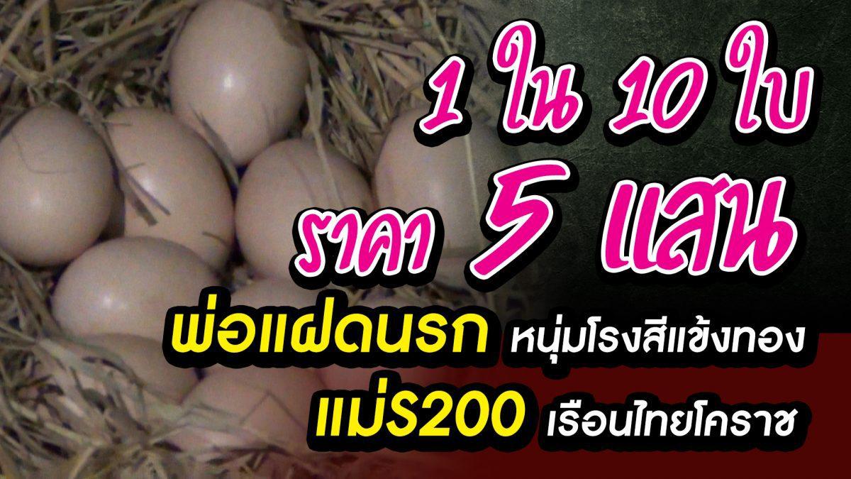 ไข่ไก่ชนแพงที่สุดในโลก ใบละ 5แสน